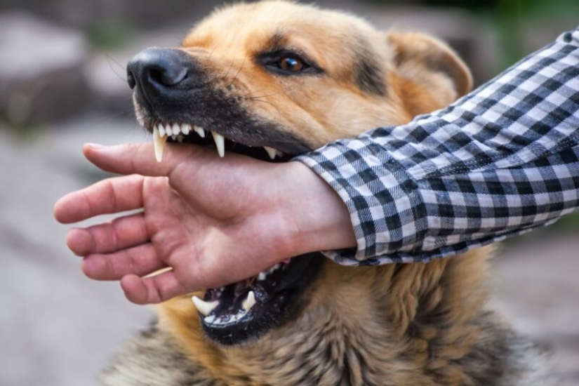 10 common myths about rabies that it is time to stop believing