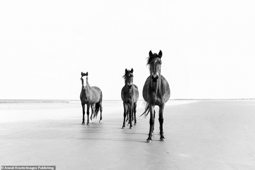 10 magical photographs of the wild horses of Cumberland island