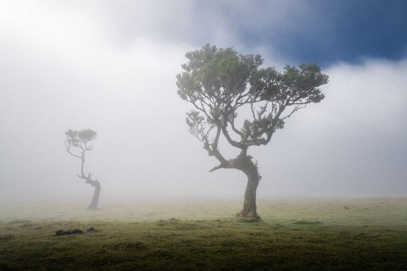 15 beautiful photos of mystical forests on the island of Madeira