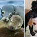 25 adorable photos that will convince you that dogs and seals — relatives