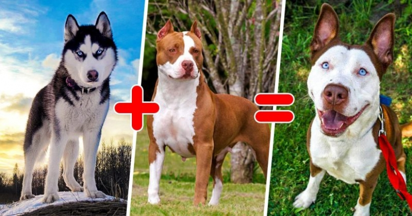25 of the most unusual breeds of dogs obtained by crossing the