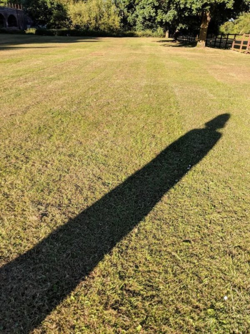 30 funny photos of shadows that look like something else