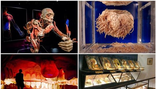 6 most shocking anatomical museums in the world