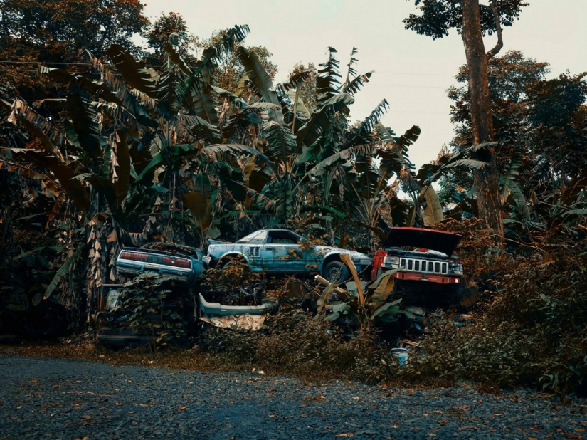 Abandoned cars in the Hawaiian jungle: a photographic project of Thomas Strigelsky