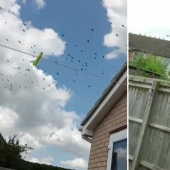 Black revenge: he lured on the lawn of a neighbor 300 crows for Pets