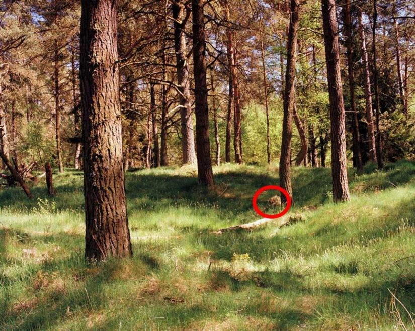 Can you see the camouflaged German sniper, pricelevels right in you?