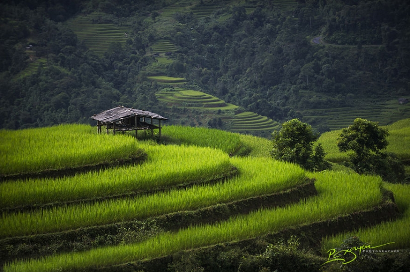 Charming beauty of Vietnam