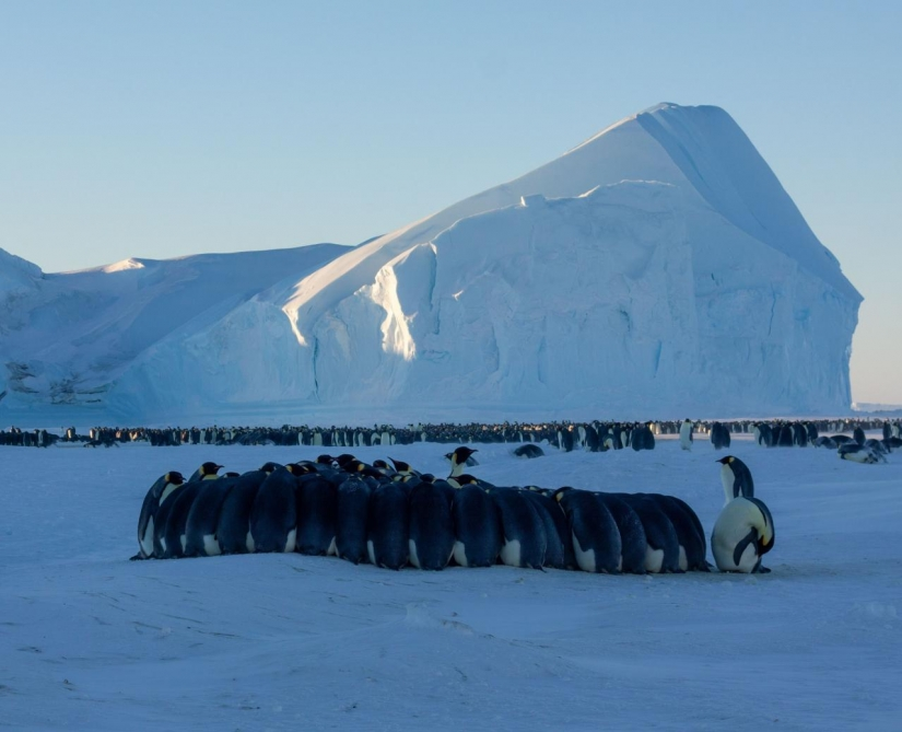 Detailed instructions: how to get into a polar expedition to Antarctica