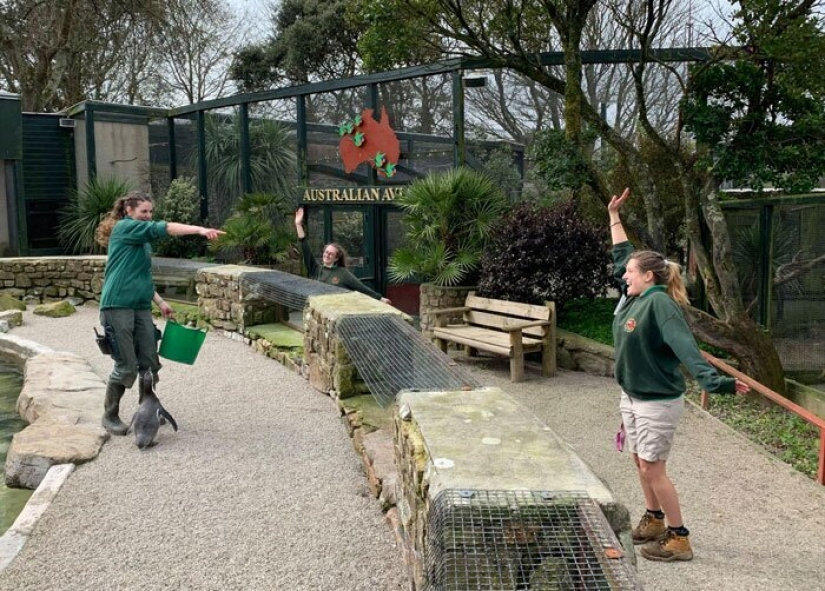 Four employees of a zoo in UK to wait out the quarantine of animals