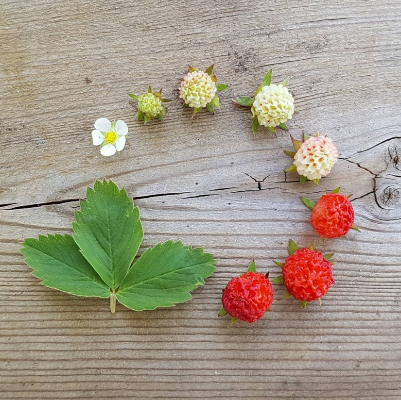 From flower to berries: how is the life cycle of plants