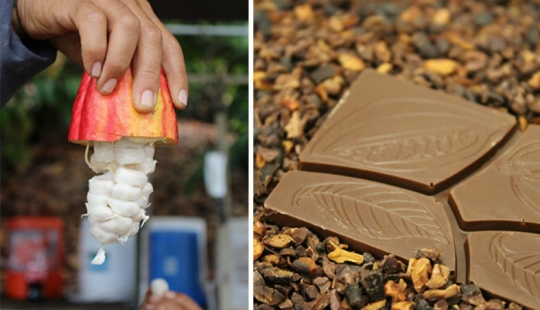 From the pods on the tree to the finished chocolate bar: how do craftsy chocolate