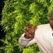 Fun boxer: Mike Tyson raises on his ranch marijuana and treats her guests