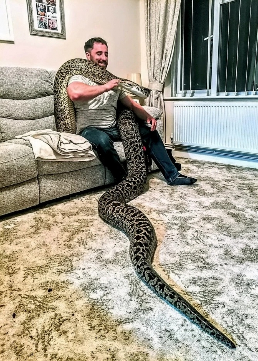 Game with death: the British home with a huge Python, which can swallow a deer for a few minutes