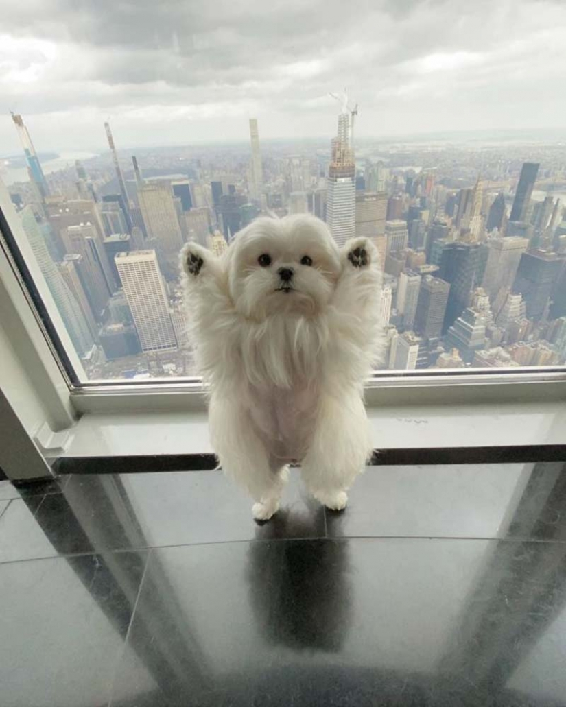 Gap millimetr: cute dog Coco who likes to stand on their hind legs