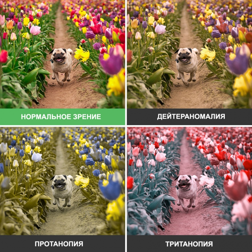 How the world looks through the eyes of a colorblind