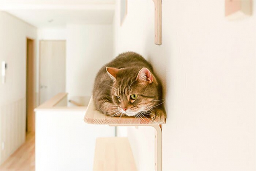 How to construct a home for lonely cat-lovers in Japan