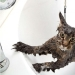 How to wash a cat and live