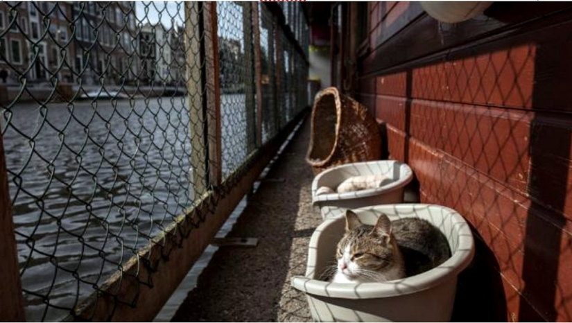Looks like the world's only floating cat shelter