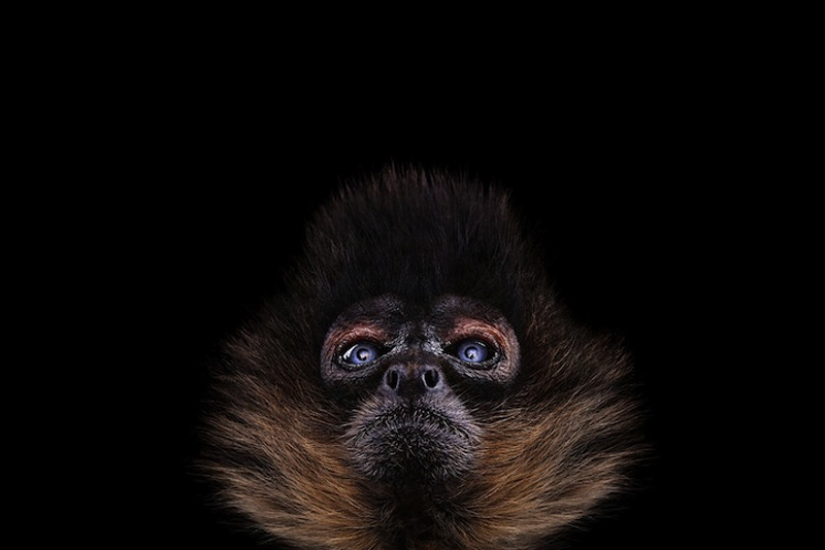 Portraits of animals close up