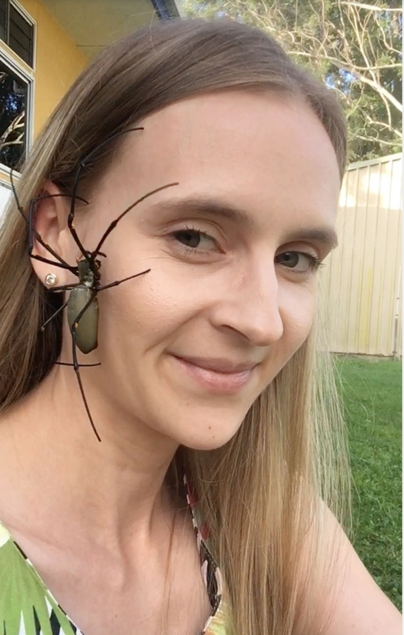 Relax is not for the faint of heart: Australian relieves stress, allowing the spiders to crawl on the face