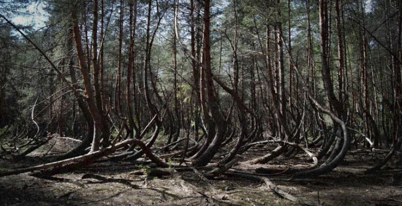 Seven of the most terrible of the world's forests