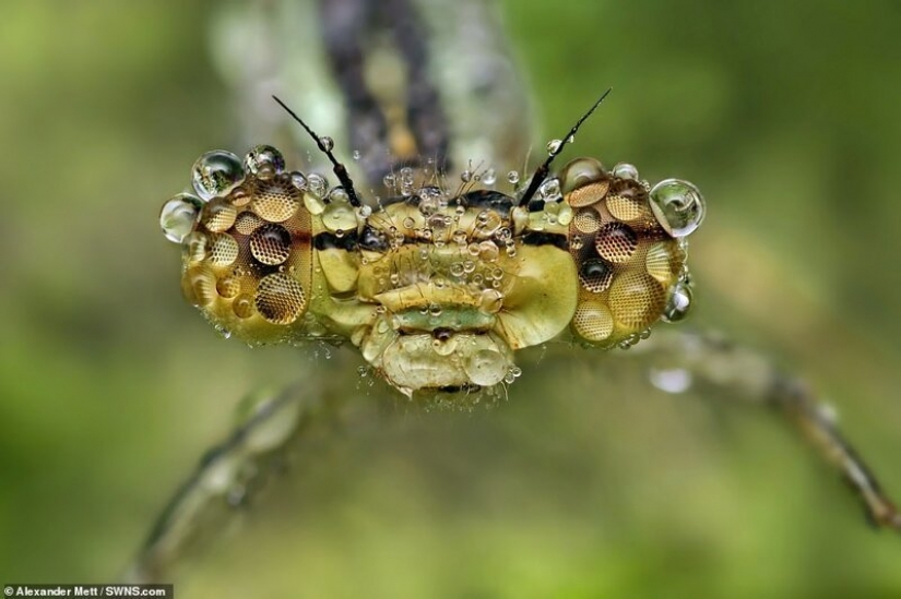 The life of insects: amazing macro photography by Alexander Mette