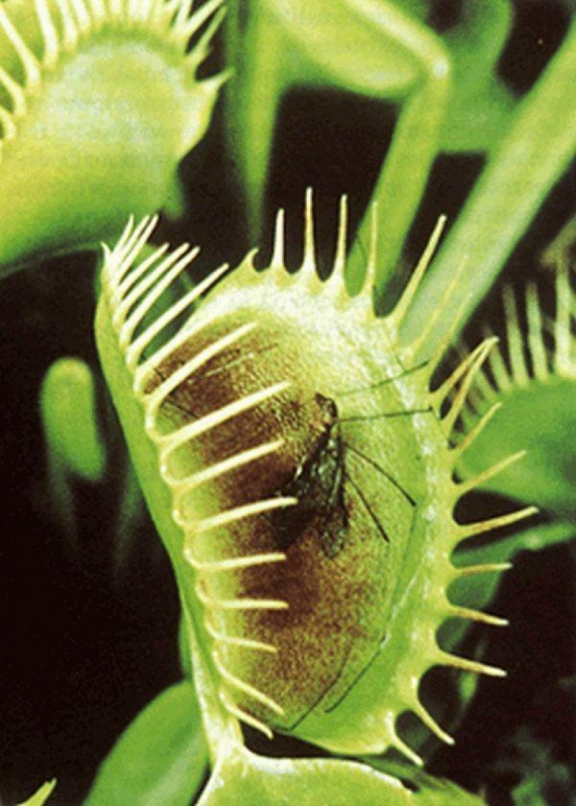 The most scary plants in the world that grow, may your house
