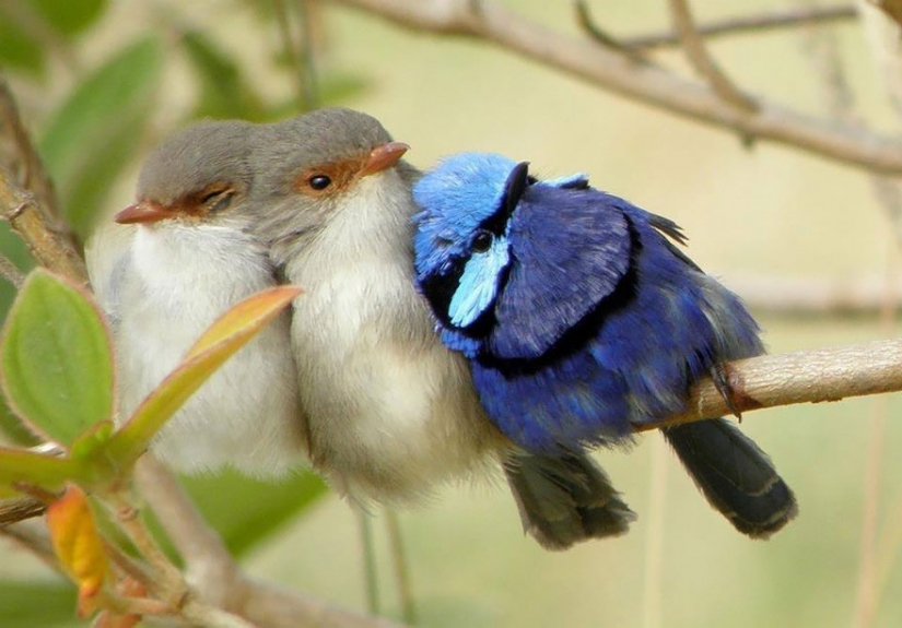 These birds know how to cuddle!