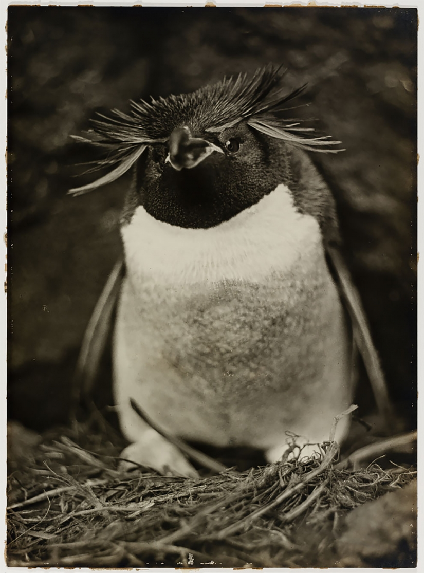 Unique photos from the first Australian Antarctic expedition 1911-1914 years
