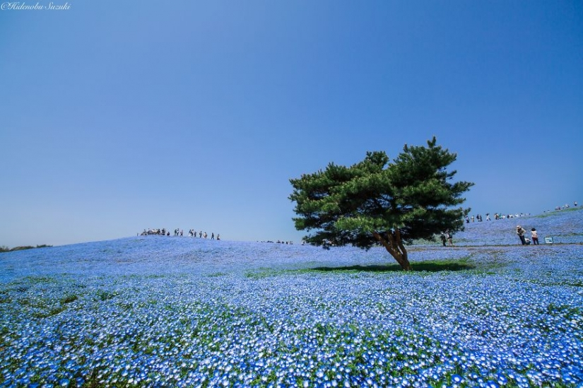 15 most beautiful places in Japan