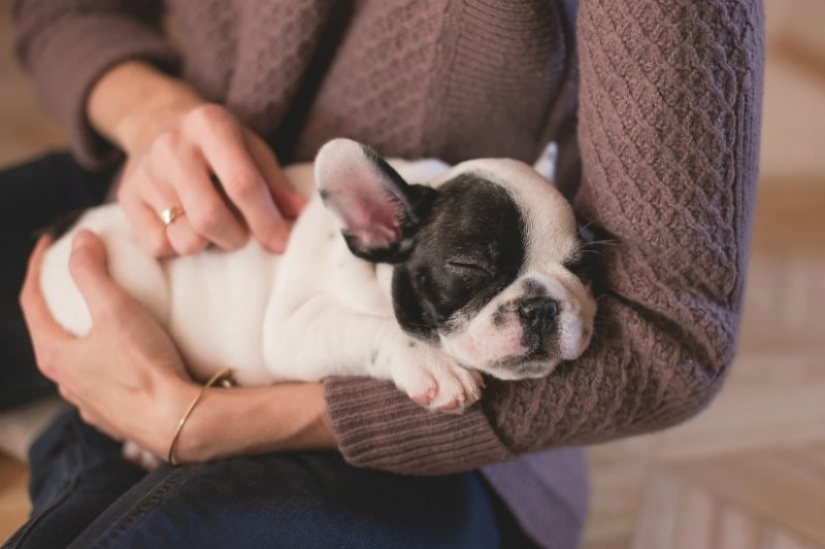 7 facts about the benefits of Pets for human health