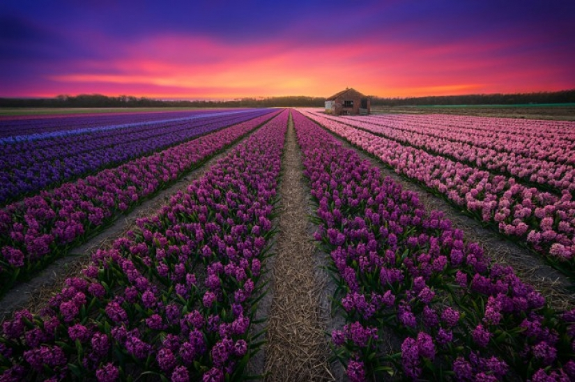 Amazing beauty of the Netherlands