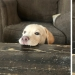 Dogs subaki: these funny critters will cheer you up!