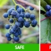 How to distinguish 6 pairs of plants that are easy to confuse with each other