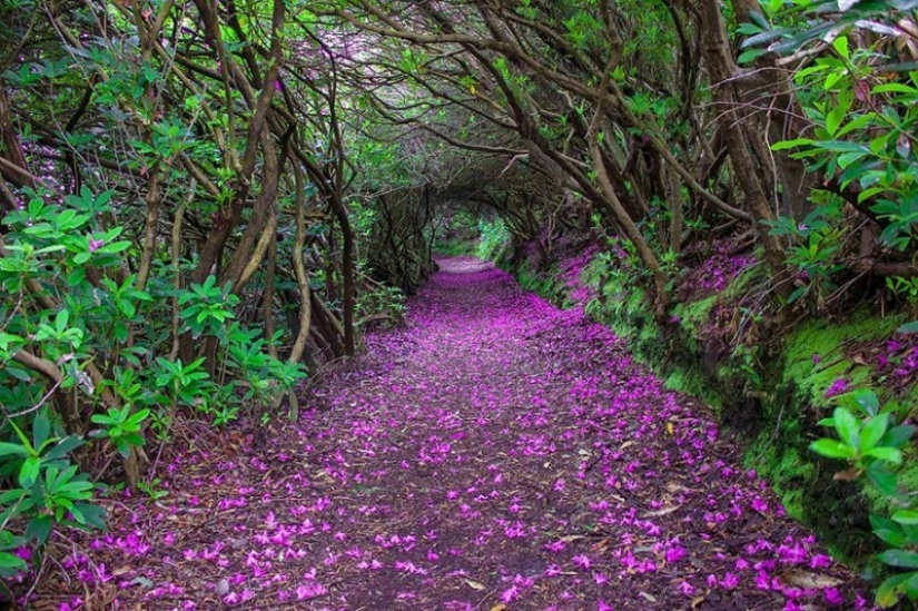 Magical trail leading straight into a fairy tale