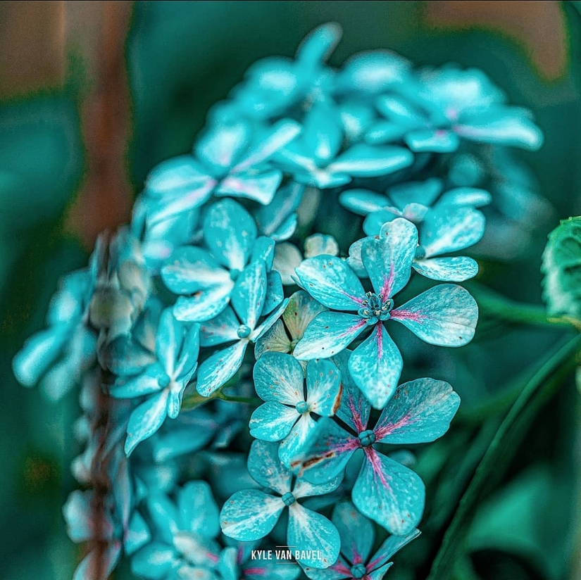 The magic of macrophotography: beautiful flowers and insects in the lens Kyle van Bavel